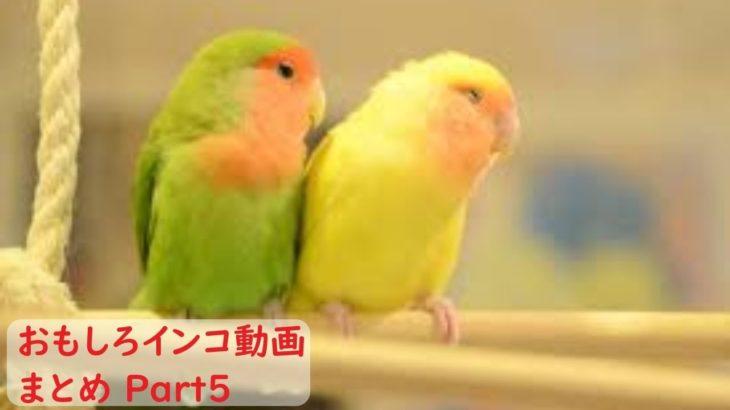 【面白 インコ】おもしろインコ動画まとめ!#5【かわいい】