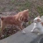 「面白い動物」あり得ないことをする犬, 猫・おもしろ犬, 猫のハプニング, 失敗集 #25