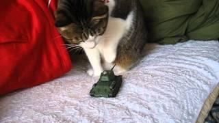 戦車のラジコンにびっくりする猫