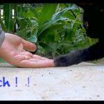 母猫に見捨てられた子猫〜保護 録(10 )~小さな心の葛藤~ Kitten abandoned by his mother cat.