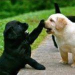 「絶対笑う」最高におもしろ犬,猫,動物のハプニング, 失敗画像集 #352