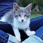 猫 泣ける話・保護した全盲の捨て子猫、どんな試練も『ケセラセラ』・招き猫ちゃんねる