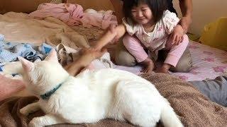 猫さんもビックリ!朝の謎ダンス