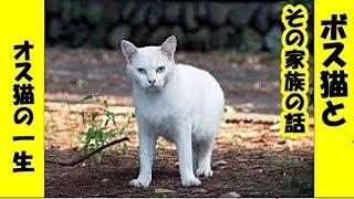 猫 泣ける話・地域を治めるボス猫の死とその家族の話・招き猫ちゃんねる