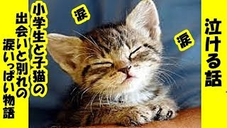 感動 涙ぼろぼろ物語、小学生と子猫の出会いと哀しい別れ泣ける話・招き猫ちゃんねる