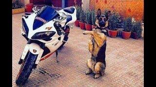 「面白い動物」あり得ないことをする犬, 猫・おもしろ犬, 猫のハプニング, 失敗集 #73