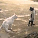 【ねこ】ドジで面白い猫ちゃん達【ねこ】