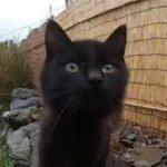 カメラを覗き込む黒猫子猫がカワイ過ぎる