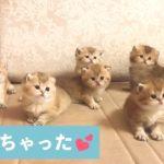 これは、分身の術…❓ 子ネコたちのシンクロ具合に、思わずキュン❣️【PECO TV】
