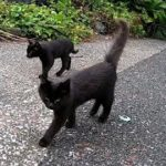 ついてくる黒猫ちゃん達がカワイ過ぎる