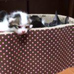 母猫と子猫の詰め合わせがかわいい