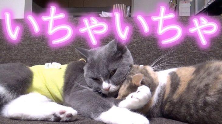 かわいい猫とかわいい猫がイチャイチャしているので邪魔して割って入りたい