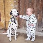 「面白い動物」あり得ないことをする犬, 猫・おもしろ犬, 猫のハプニング, 失敗集 #97