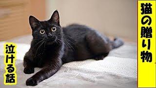 【猫の贈り物】毎朝、飼い主さんのベッド に『大きな葉っぱ』を持ってくる猫さん。 素敵な贈り物で飼い主さんの心を温め続 ける (*´ω`*)・招き猫ちゃんねる