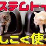 【猫のシステムトイレ】より安く簡単に掃除ができる方法をご紹介!パインウッドと激安ペットシーツを活用!