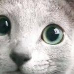 癒し系動画 可愛いねこちゃん おもしろ動物 まとめ machv उपचार प्रणाली दिलचस्प सबसे लोकप्रिय!