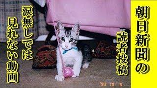 【感動 泣ける話 あの世猫】朝日新聞の読者投稿 亡き猫からの贈り物・ネットで話題に・家族の再会綴った感動の投稿【泣ける話 感動 動物 猫】動画 里親・招き猫ちゃんねる