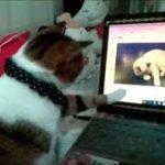 猫動画を見ている猫が超かわいい 愛猫ボク・・・うちの猫ちゃんたちカワイイTV