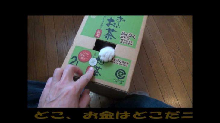 超強欲ねこ!! 『リアル猫貯金箱』