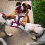「面白い動物」あり得ないことをする犬, 猫・おもしろ犬, 猫のハプニング, 失敗集 #57