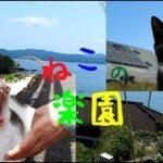 猫の楽園!島民よりもねこちゃんが多い宮城県田代島の旅