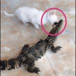 「面白い動物」あり得ないことをする犬, 猫・おもしろ犬, 猫のハプニング, 失敗集 #96