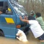 「面白い動物」あり得ないことをする犬, 猫・おもしろ犬, 猫のハプニング, 失敗集 #71