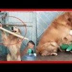 「面白い動物」あり得ないことをする犬, 猫・おもしろ犬, 猫のハプニング, 失敗集 #67