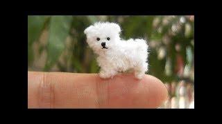 「絶対笑う」最高におもしろ犬,猫,動物のハプニング, 失敗画像集 #411