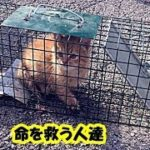 猫レスキュー・排水溝に落ちた子猫達を救うため、人間に助けを求めてきた野良猫のお話・招き猫ちゃんねる