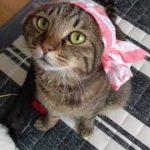猫専用ガチャ『ねこキャンディーちゃん』
