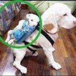 「面白い動物」あり得ないことをする犬, 猫・おもしろ犬, 猫のハプニング, 失敗集 #83