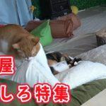 猫部屋おもしろハプニング集 猫部屋の出来事 2018 4月編Cats room's funny moments 2018  April