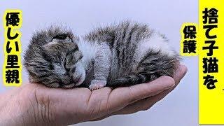 保護猫・農場の片隅に取り残され大きな声で鳴いていた子猫 優しい人達のおかげで成長を始める・招き猫ちゃんねる