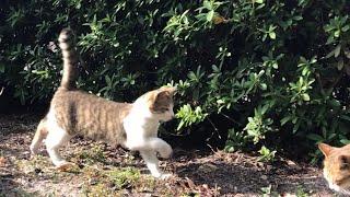 母猫の元へ駆け出す超カワイイ子猫ちゃん!公園地域猫動画 japanese cat video