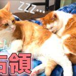 朝起きたら毛布を猫たちに占領されていました…【可愛いから許す】