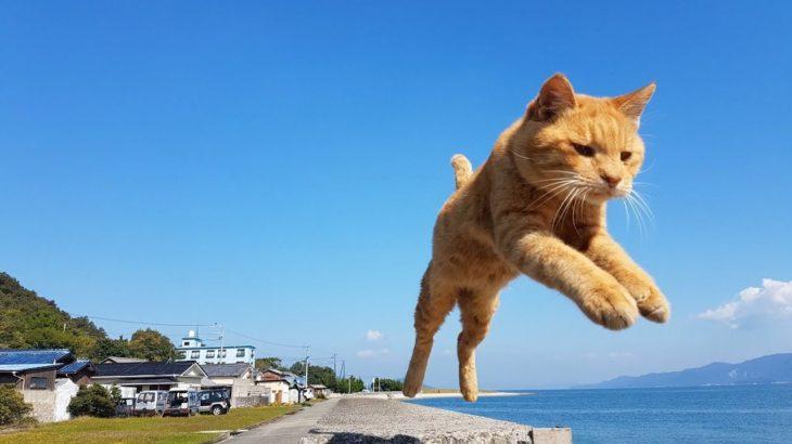 【猫動画】佐柳島の飛び猫