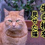 【感動 泣ける話】猫の仁義と筋の通った野良猫の生き様! トラよ・・君に「猫」を教わった気がする(猫 感動 泣ける話 保護 涙腺崩壊 感涙 動物 動画 里親)招き猫ちゃんねる