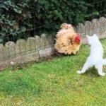 「面白い動物」あり得ないことをする犬, 猫・おもしろ犬, 猫のハプニング, 失敗集 #115