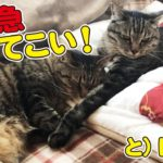 我が家で大人気の猫布団をもう一組買ってきた結果…!?