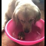 「面白い動物」あり得ないことをする犬, 猫・おもしろ犬, 猫のハプニング, 失敗集 #129