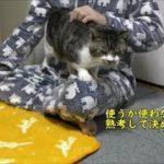 最近寒いのでぬくぬくの温かいマットを猫に購入したけど・・・頑なに拒否る猫リキちゃんが最後には!?【リキちゃんねる 猫動画】Cat video キジトラ猫との暮らし