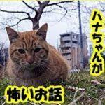 心霊実話・家と家族を守ってくれている猫のハナちゃんのお話・招き猫ちゃんねる