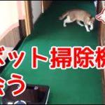 猫、ロボット掃除機と出会う。Cat, meets a robot vacuum cleaner.