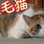 魅惑のねこシリーズ 「三毛猫」