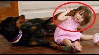 「面白い動物」あり得ないことをする犬, 猫・おもしろ犬, 猫のハプニング, 失敗集 #111