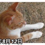 猫動画 鳥さんが気になるねこ 水曜日のネコ 2015年8月12日