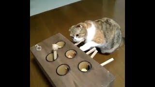 「面白い動物」あり得ないことをする犬, 猫・おもしろ犬 猫のハプニング, 失敗集 #131