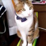 可愛い猫達 年の瀬もまったりムードで過ごしています!・・・うちの猫ちゃんたちカワイイTV