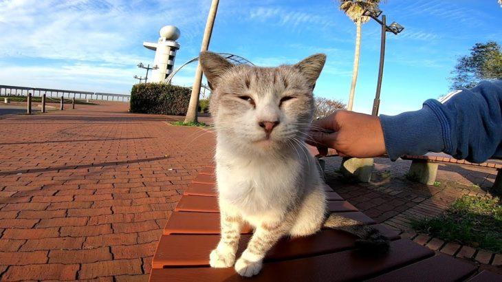 公園のベンチに座っていた野良猫をねこじゃすりで撫で撫でしてみた